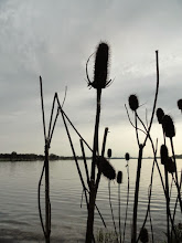 Photo: Thistles by the lake at dusk at Eastwood Park in Dayton, Ohio.