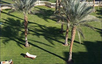 """Photo: Отель """"Шератон"""", иногда загорал под пальмами"""