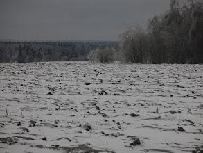 Photo: Поле возле Семеновского