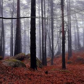 by Filipe Cardoso - Nature Up Close Trees & Bushes