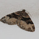 Toothed Brown Carpet Moth