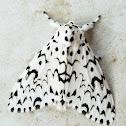 Lymantriid moth