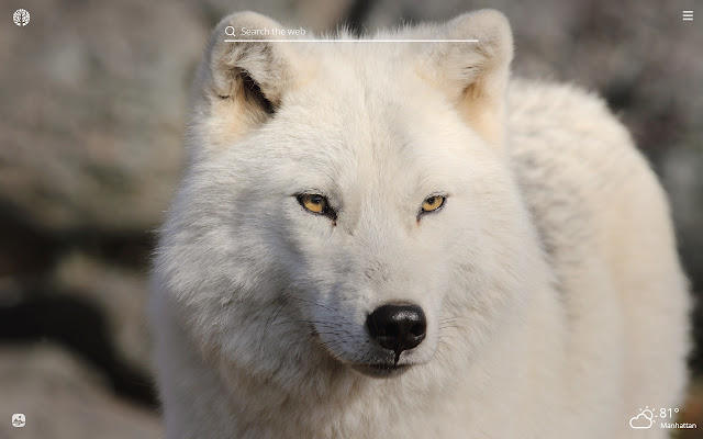 Arctic Wolf HD Wallpapers New Tab Theme