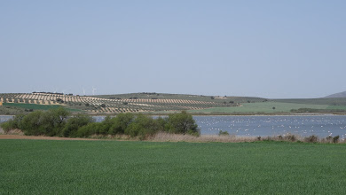 Photo: Check out the olive groves on white chalk soil, far side of lakc