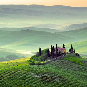 Tuscan Morning by Francesco Riccardo Iacomino - Landscapes Mountains & Hills ( countryside, hills, tuscany, italian, podere, house, olive, quiete, tree, italia, nature, hay bale, orcia, hill, toscana, mysterious, quirico, mood, agriculture, rural, homestead, country, dawn, hay, agriturismo, haze, val d'orcia, bales, farmhouse, beauty, landscape, spring, farm, idyllic, cypress, italy, picturesque, pienza, peaceful, green, scenics, morning, belvedere, field, amazing, foggy, residence, fog, meadow, dreamland, sunrise, scenery, tuscan, garden )