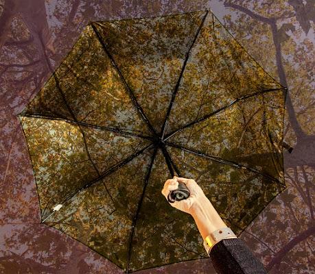 Pioggia di foglie di Damiano Agnes