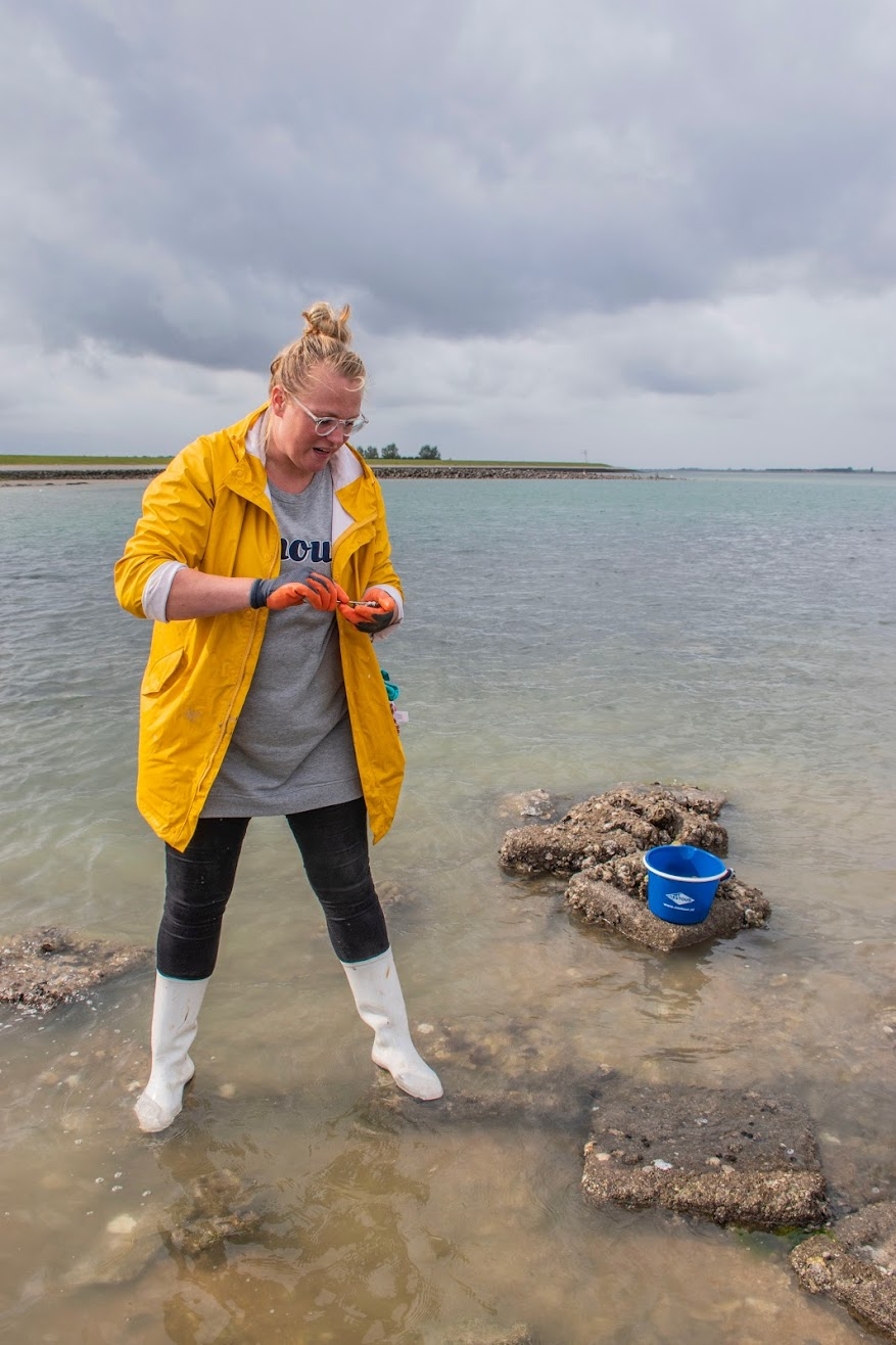 oesters-rapen-zeeland