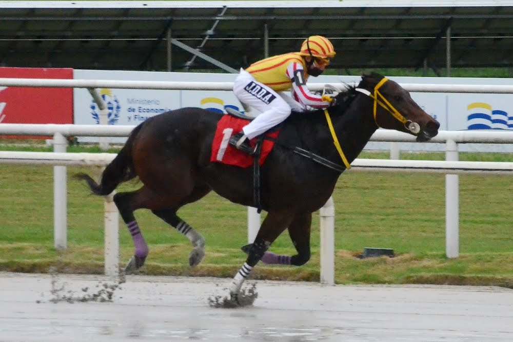 Sin Tocar (Ioya Bigtime) conquista Condicional (1000m-Arena-MAR).