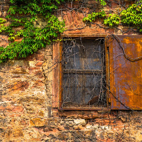 Rusty Window by Luke Albright - Buildings & Architecture Decaying & Abandoned ( old, rusty, vines, stones, window, wall, building,  )
