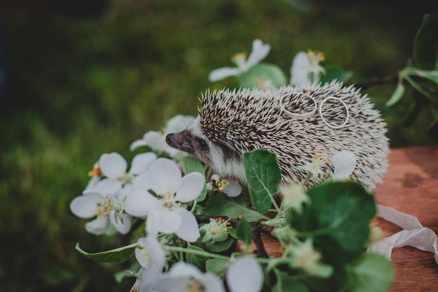 Свадебный фотограф Таисия-Весна Панкратова (Yara). Фотография от 26.05.2016