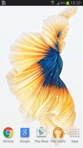 Bettaの魚6Sライブ壁紙