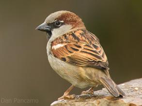 Photo: a sparrow a day