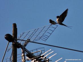 Photo: Aerial Romance 3...Disengage!