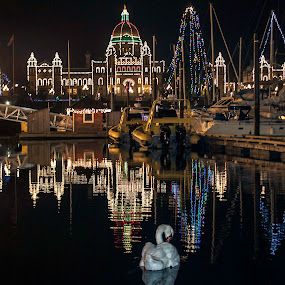 Christmas Swan by Doug Clement - Landscapes Travel ( lights, swan, night, victoria, travel )