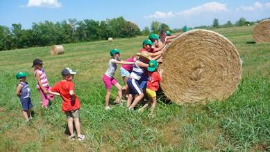 Photo: I lavori dell'orto: raccolta del fieno
