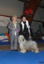 Photo: ICH.HONEYTASTE HOTTER THAN HELL EURO DOG SHOW CELJE 2010 - Ex.1, CAJC, BOB junior, res. BIS
