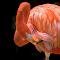 Flamingo Pixoto-3326.jpg