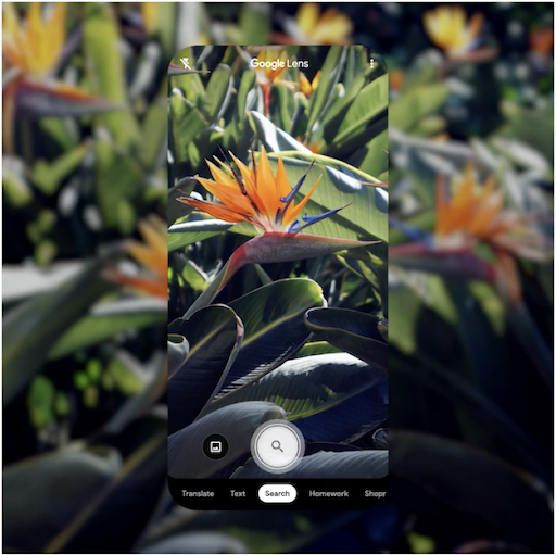 Google レンズを使って植物や動物を調べる