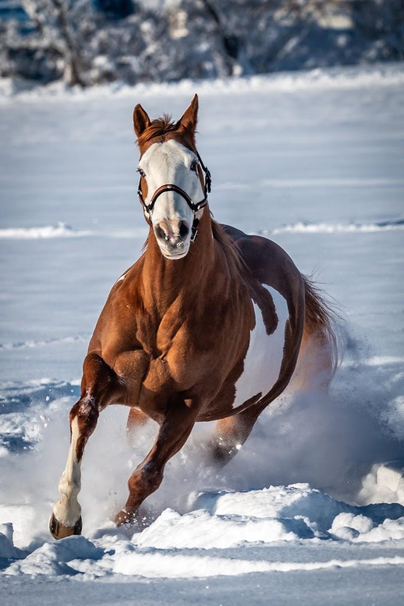 Cavallo di thomas_gutschi