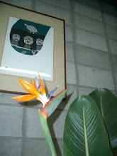 Photo: 極楽蝶花 南アフリカ原産