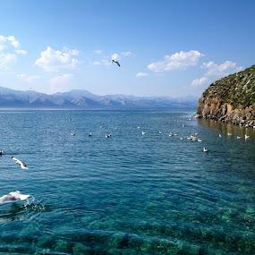 The gulls by Эрдэнэцэцэг Баяраа - Landscapes Waterscapes ( bird, mountain, nature, gulls, island )