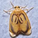 Artiid Moth
