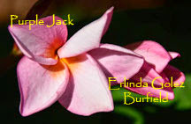 Photo: Purple Jack_Erlinda Golez Burfield_2014