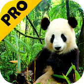 3D Animals Parallax PRO Live Wallpaper Android APK Download Free By Acinis