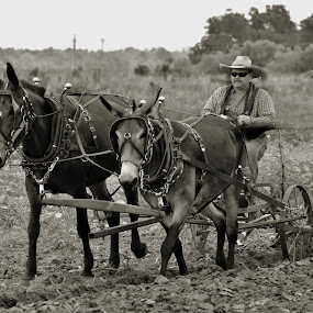 Working The Fields by Jarrod Unruh - People Professional People ( work, field, farm, farmer, black and white, outdoors, horse, working, farming,  )