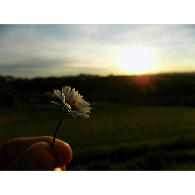 #flower #sunshine #sunny #sunset #nature #nature_perfection #natureshots #green #light #me #photo #photografer #photografy #vscmacro #follow #followme #like #instagood #instagram #photooftheday #picoftheday #beautiful #sun #sky #blue #clouds di camaa21