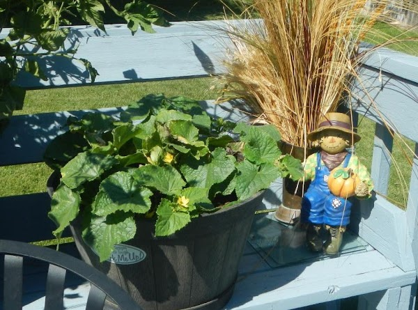 Picture of my cucumber plant. I picked the first cucumber today!!