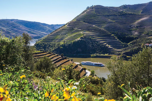 Uniworld's Queen Isabel sails through irrigated farmland on the scenic Douro River in Portugal.