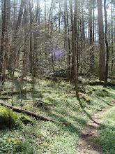 Photo: Gabe's Mountain Trail