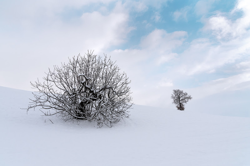 Solitari nella neve di renzodid