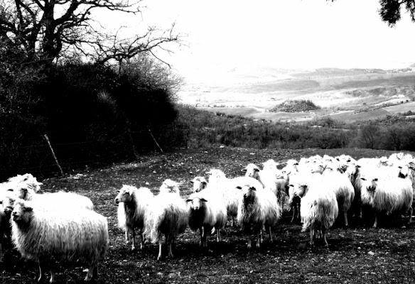 La campagna...metafora di vita.. di Serenella