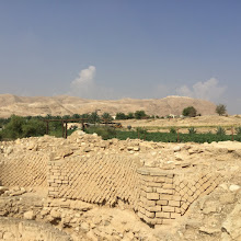 Photo: נטעות במקום חפירות- הורדוס