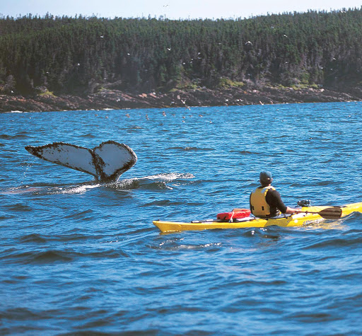 A kayaker in Witless Bay spots a whale tail along the eastern coast of Newfoundland.