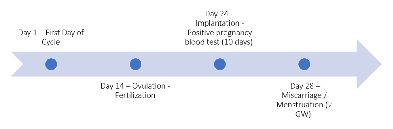 Chemical pregnancy timeline of a natural pregnancy – This arrow shows an approximate timeline of events of when a chemical pregnancy may occur.