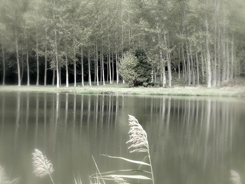 La quiete del silenzio..... di Giuseppe Loviglio