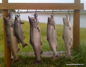 Photo: Alaska King Salmon fishing on the Kasilof River is outstanding.