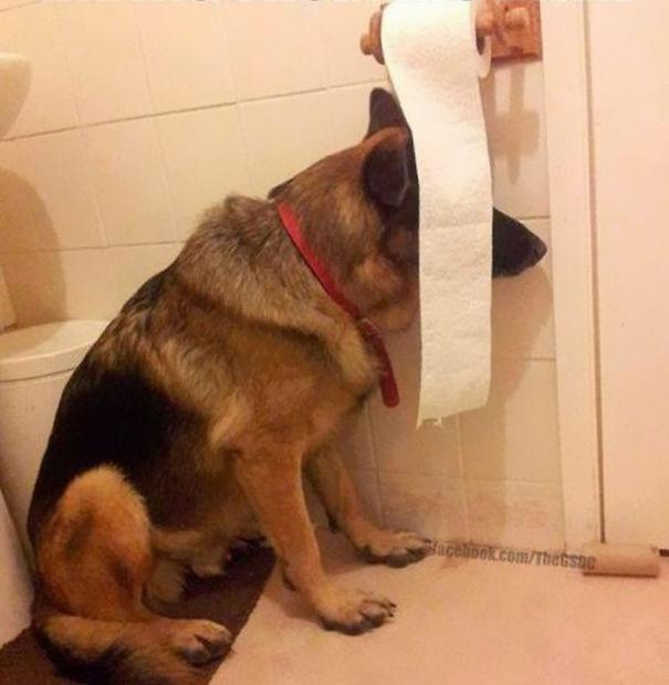 hiding-ninja-funny-dogs-261__605.jpg