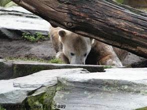 Photo: Knut schaut eben selbst nach und...