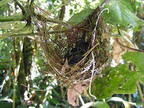 Photo: Birds asleep in a nest