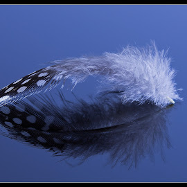 Floating feather by Christa Koekemoer - Artistic Objects Other Objects