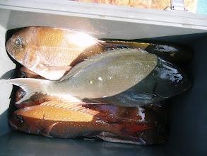 Photo: タダクマさんの釣果! オナガ混じりの10匹でした!