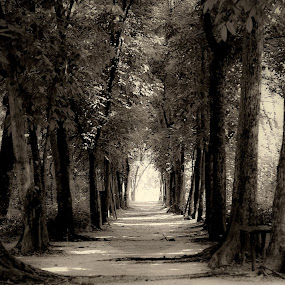 Forest Path by Aditya Kusuma - Landscapes Forests ( to, going, mountain, wood, relax, art, way, forest, road, landscape, woods, nature, artistic, path )