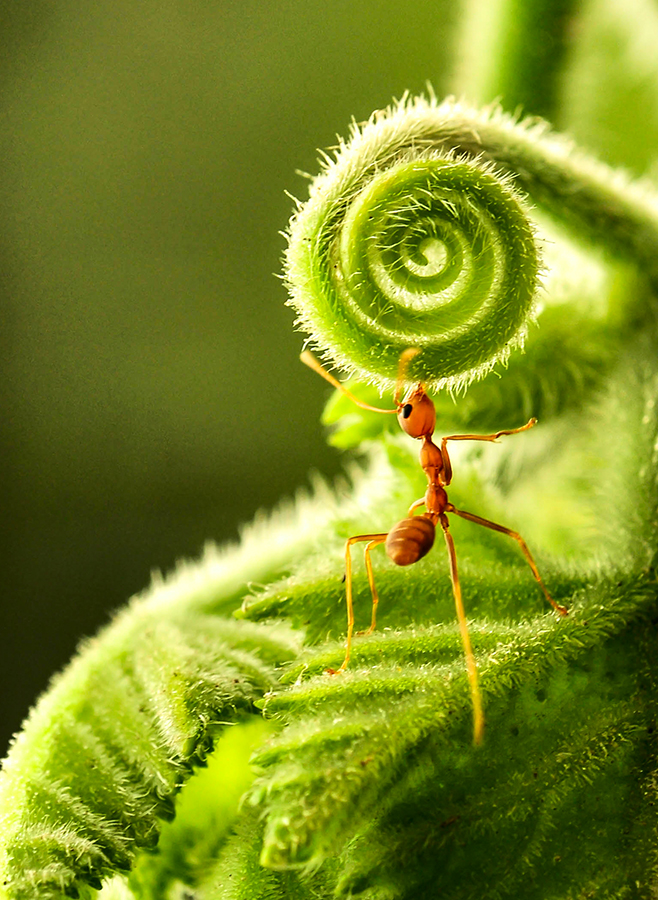 Climb by Kadir Lie - Animals Insects & Spiders ( pwcinsectsandspiders,  )