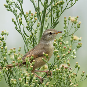 Co-existence by Karin Mitton - Animals Birds ( bird, wasp, serene, prinia, confidence,  )
