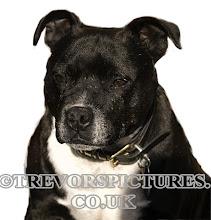 Photo: PET PORTRAIT LOOKS GRUMPY SOFT AND FUSSY