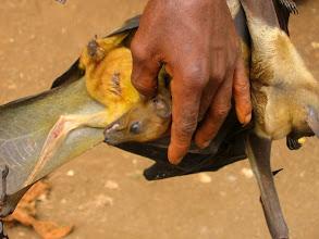 Photo: Bats